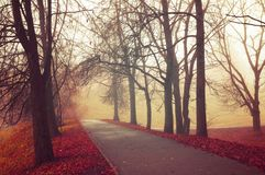 Fall landscape - mysterious fall park alley with bare fall trees and dry fallen orange leaves in the fog. Fall landscape - mysterious foggy fall park alley with royalty free stock image