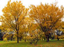 Fall landscape. Quebec province Canada royalty free stock photos