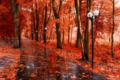 Fall landscape. Red fall trees and fall leaves on the wet footpath in park alley after rain. Creative filter applied royalty free stock image