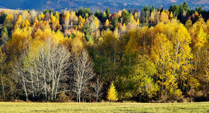 Fall landscape in Slovakia Royalty Free Stock Images