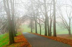 Fall landscape - somber fall park alley with bare fall trees and dry fallen orange leaves in the fog. Fall landscape - somber foggy fall park alley with bare royalty free stock image