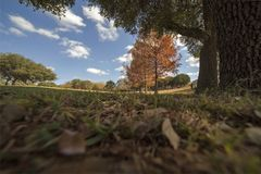 Fall Landscape w/ Cypress Trees Stock Photography