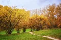 Fall Landscape: Walkway Path in Forest Consisting of Wilding Apple Trees and Birches at Sunny Day. In September stock photography