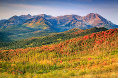 Fall landscape in the Wasatch mountains. Stock Images