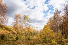 Fall Landscape: Wide Glade in Birch Forest with Golden Foliage at Sunny Day. In September royalty free stock image