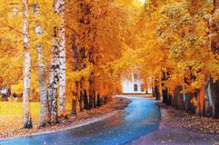 Fall landscape. Fall trees and fall leaves on the wet footpath in park alley after rain. Fall landscape. Yellow fall trees and fall leaves on the wet footpath in stock photo