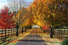 Fall Lane Royalty Free Stock Photo