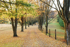 Fall Lane to Walk Stock Photography