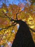 Fall-Laub Stockfoto
