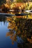 Fall-Laub stockfotografie