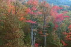 Fall-Laub, Acadia Lizenzfreies Stockfoto