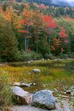Fall-Laub, Acadia Stockfoto