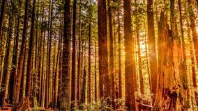 Fall-Laub in Yosemite Stockfotos
