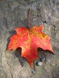 Fall Leaf Stock Photos
