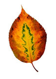 Fall leaf Royalty Free Stock Photos