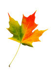 Fall leaf Stock Image