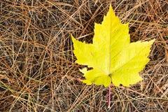Fall Leaf Royalty Free Stock Photos