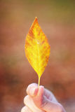 Fall leaf. Hand holding a single leaf as symbol of fall Royalty Free Stock Photography