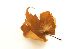 Free Fall Leaf Royalty Free Stock Images - 644929