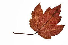 Fall Leaf Stock Photo