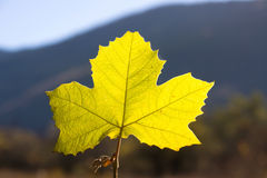 Fall leaf Stock Image