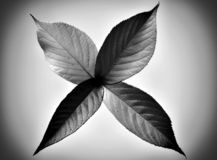 Fall leaf abstract on gray background in black and white. Fall leaf abstract in autumn colors on gray glassy background in monochrome royalty free stock photo
