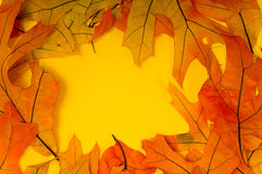 Fall Leaf Background Royalty Free Stock Images