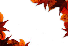 Fall Leaf Background Stock Photo