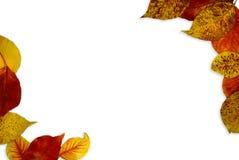 Fall Leaf Background Stock Photo