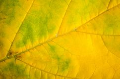 FAll leaf background stock images