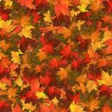 Fall Leaf Background Illustration Royalty Free Stock Image