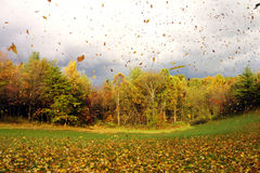 Fall Leaf Blow. From an approaching storm front Stock Image