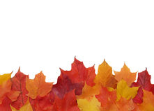 Fall leaf border Royalty Free Stock Images