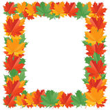 Fall leaf border. Isolated on a white background with a place for text of your image Stock Images