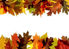 Fall leaf border. Colorful autumn top and bottom border Royalty Free Stock Image