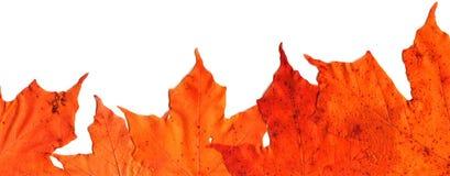 Fall Leaf Border. Fall leaves make border royalty free stock photo