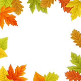 Fall  leaf border Stock Photography