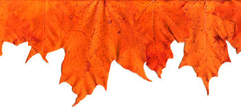 Fall Leaf Border - Top. Fall leaves make border royalty free stock photography