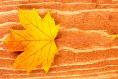 Fall leaf on brown wood background Stock Photography