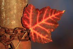 Fall Leaf & Chain Stock Photography