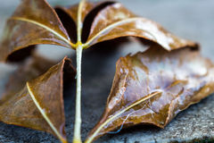 Fall leaf in the city Royalty Free Stock Photography