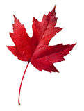 Fall leaf with clipping path Royalty Free Stock Photos