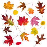 Fall Leaf Collection Stock Photo