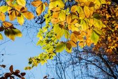 Fall leaf colors. Beautiful Fall autumn colors of trees stock image
