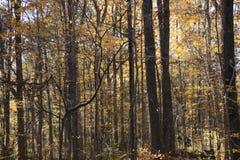 Fall leaf colors. Beautiful Fall autumn colors of trees Stock Photos