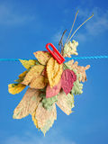 Fall leaf drying Stock Photo