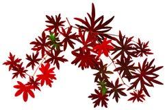 Fall_leaf_figure1 Stock Afbeelding