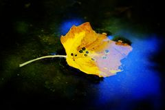 Fall Leaf Golden Color in Water Reflecting Blue Sky Autumn stock photo