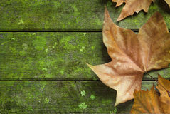 Autumn Fall Leaf Green Background Stock Photography