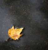 Fall leaf on the ground after the rain Stock Photos